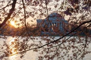 tidal basin cherry blossoms - 20140409-DSC_0175 - 20140409