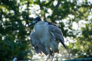 nat'l zoo - 20140523-BER_0907 -_