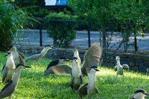 nat'l zoo - 20140523-BER_0958 -_