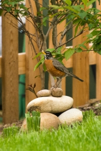 Rock and robin... - 20140517-BER_0152 - 20140517