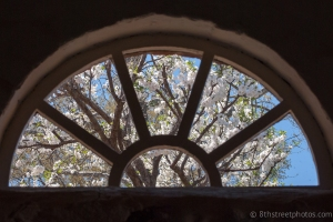 through the looking glass - 20140416-DSC_0082 - 20140416