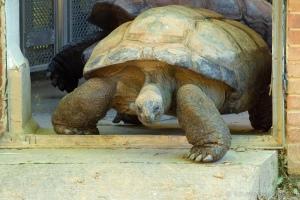 nat'l zoo - 20140523-BER_1125 -_
