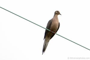 highwire act - 20140802-BER_4799 -_
