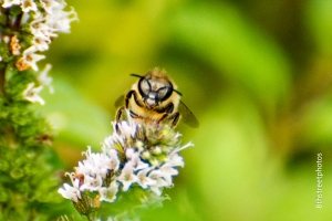 all the buzz - 20140906-BER_6034 -_