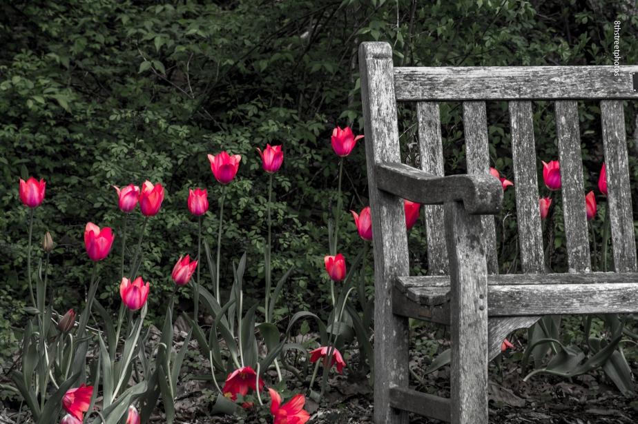 Meadowlark Park - 20150427-_JBB9135