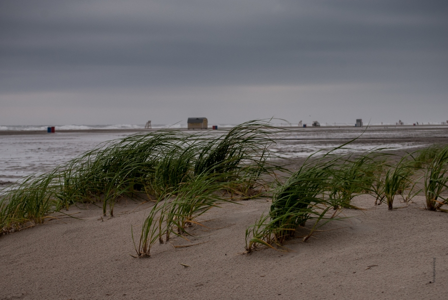 stormy day  - DSC_0120-2