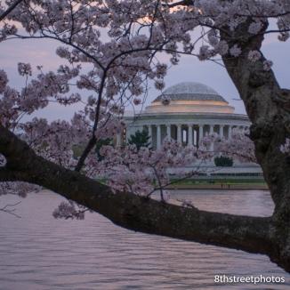 Cherry Blossoms - Sunset_20160325__JBB0003