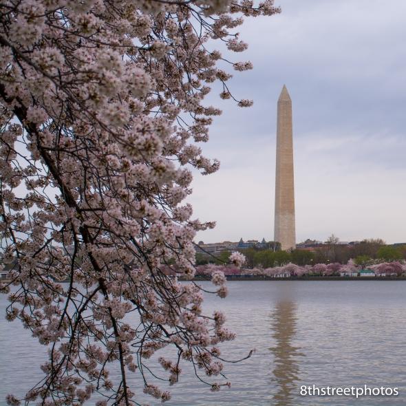 Cherry Blossoms - Sunset_20160325__JBB0033