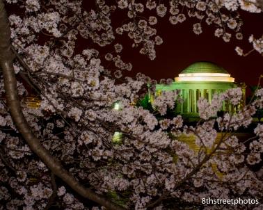 Cherry Blossoms - Sunset_20160325__JBB9846