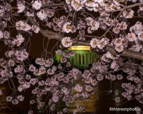 Cherry Blossoms - Sunset_20160325__JBB9874