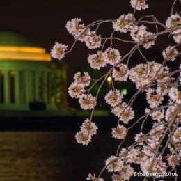 Cherry Blossoms - Sunset_20160325__JBB9924