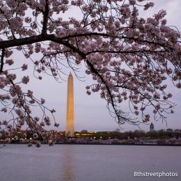 Cherry Blossoms - Sunset_20160325__JBB9965