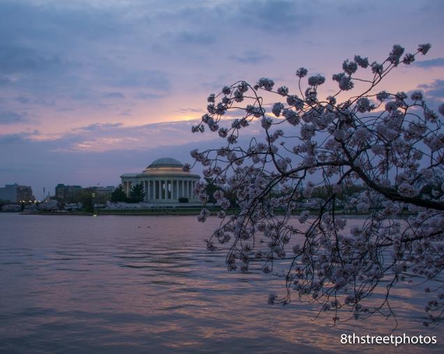 Cherry Blossoms - Sunset_20160325__JBB9994
