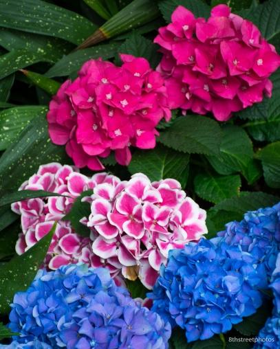 HBW - Botanic Garden Field Trip_20160518__JBB1041