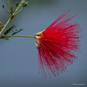 HBW - Botanic Garden Field Trip_20160518__JBB1090