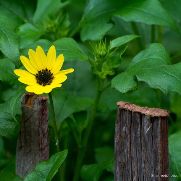 HBW - Botanic Garden Field Trip_20160518__JBB1096