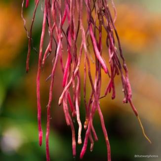 HBW - Botanic Garden Field Trip_20160518__JBB1152