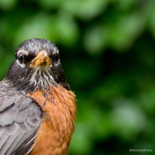 HBW - Botanic Garden Field Trip_20160518__JBB1200