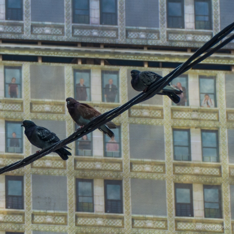 bird watchers?