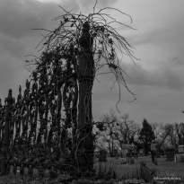 cemetery's edge