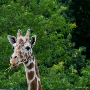 cape mayy county zoo_20170705__JBB8273