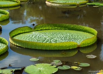 Kenilworth Aquatic Gardens_20170813__JBB8816